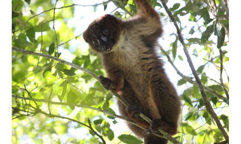 MSU technology and app could help endangered primates, slow illegal trafficking