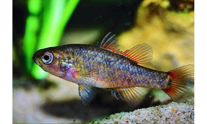 Native fish tell story of Australia's less arid past