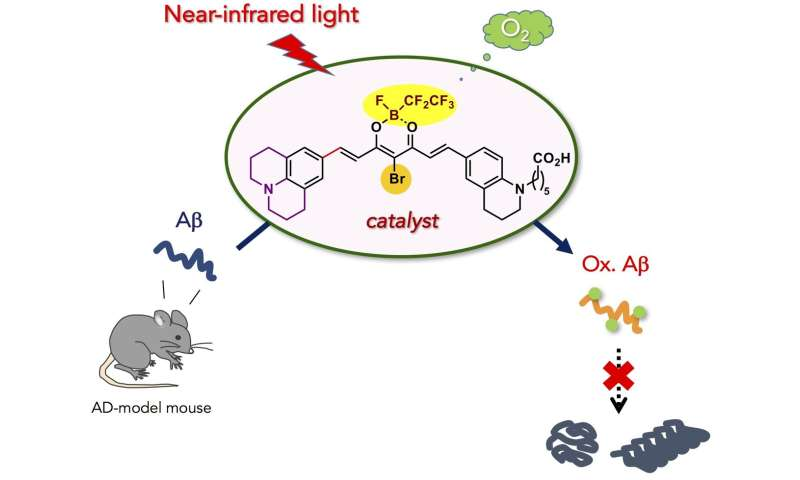 Near-infrared photoactivatable oxygenation catalysts of amyloid peptide