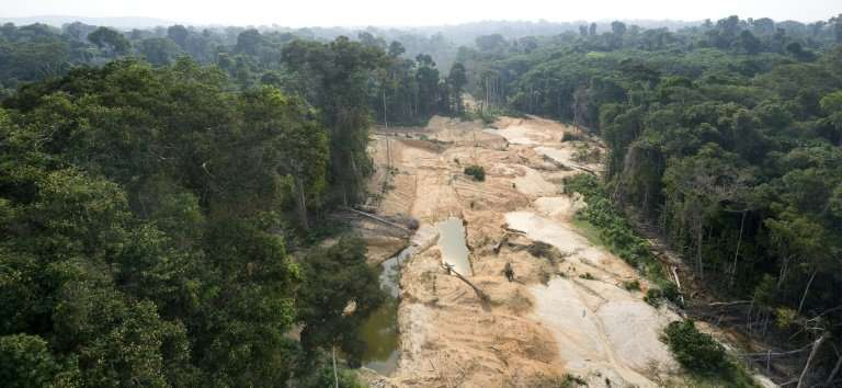 Nearly 20 percent of the Amazon rainforest, the world's largest, has disappeared in five decades