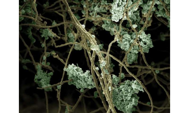 New biofuel production system powered by a community of algae and fungi