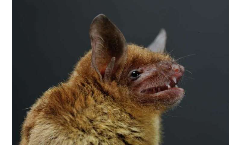 New Coronavirus Emerges From Bats In China Devastates Young