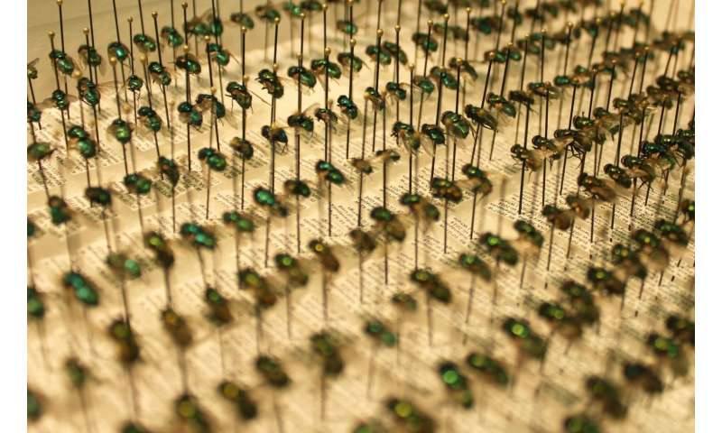 New fly species found in Indiana may indicate changing climate, says IUPUI researcher