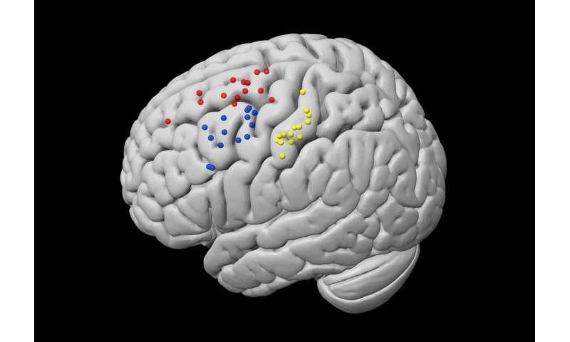 کشف ارتباط جدید بین چشم و لمس توسط دانشمندان