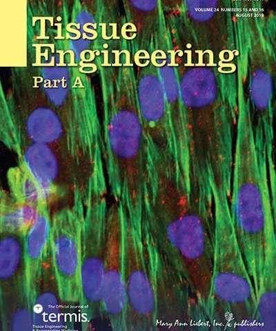 New lentivirus-based tool assesses effect of Wnt/ß-Catenin signaling on bone regeneration