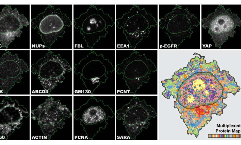 New method refines cell sample analysis
