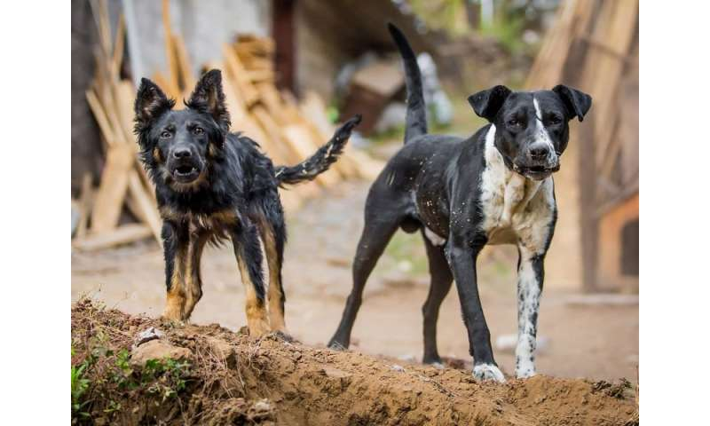 Image result for Rabies: Is it a threat to pets and humans?