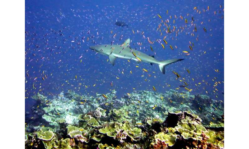 New report explores science of interventions to save coral reefs