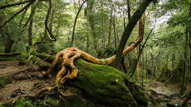 New study makes 52 million tree stories more accessible to science