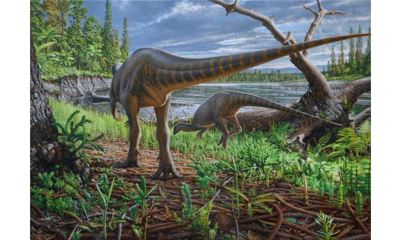 New turkey-sized dinosaur from Australia preserved in an ancient log-jam