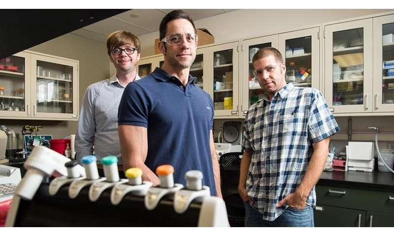 Novel genetic method improves efficiency of enzyme