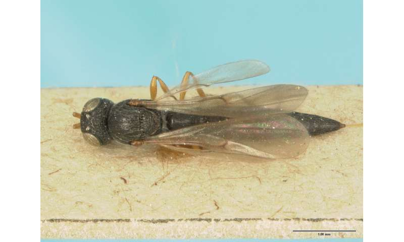 One species described multiple times: How taxonomists contribute to biodiversity discovery