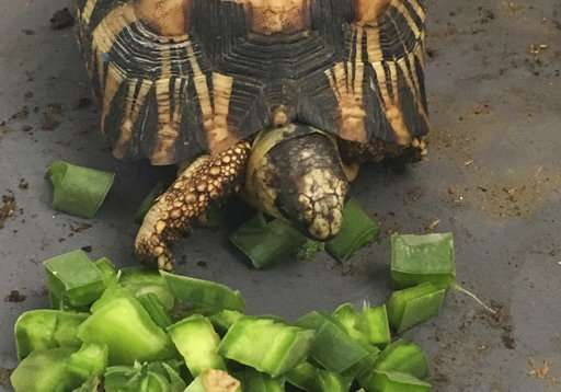 Over 10,000 endangered tortoises are rescued in Madagascar