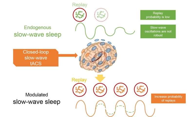 Overnight brain stimulation improves memory