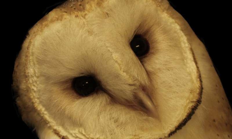Owls help JHU scientists unlock secret of how the brain pays attention