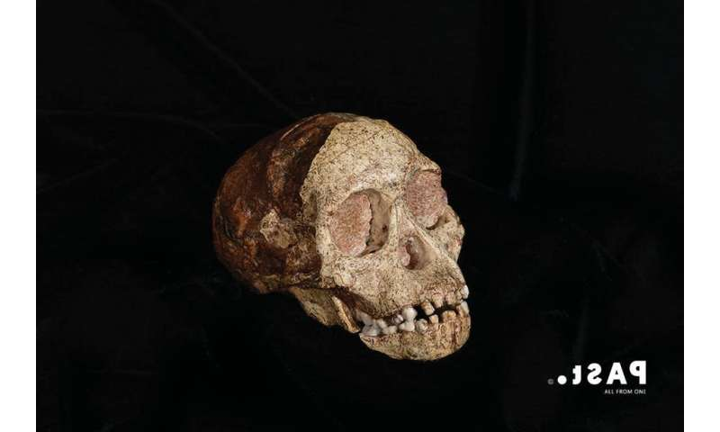 Palaeontology: a way of reaching into the past to build lessons for the present