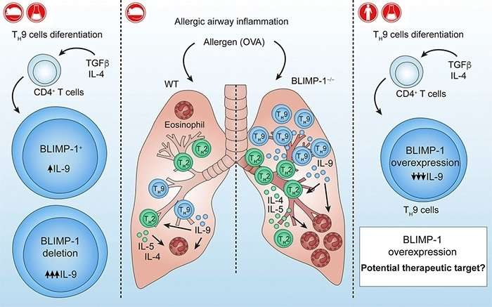 Pathway to resolve allergic asthma is discovered
