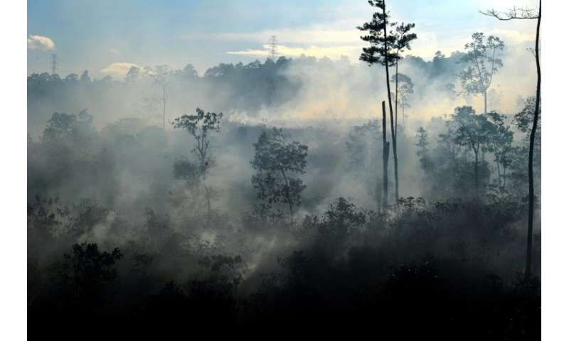Peatlands, such as these in Indonesia, store twice as much carbon as the world's forests, even though they cover just three perc