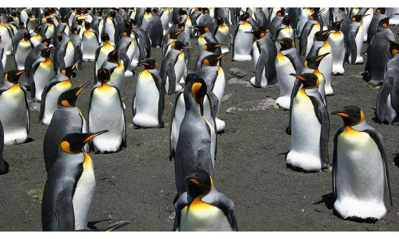 Penguins go through the flow