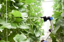 Pepper-picking robot demonstrates its skills in greenhouse labour automation