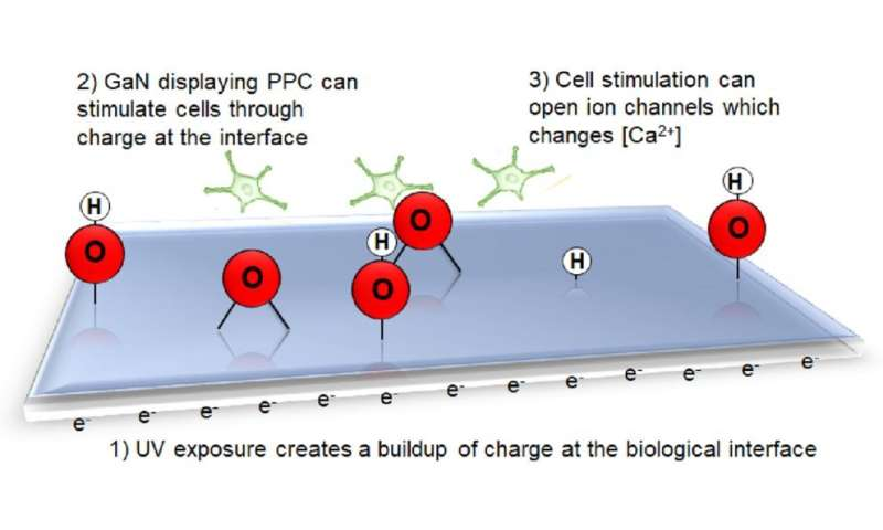 Persistent photoconductivity used to stimulate neurotypic cells