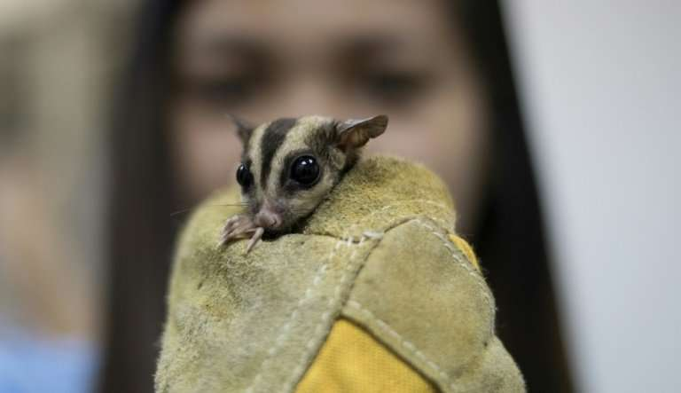 Philippine officials put the market value of the confiscated creatures at $192,000