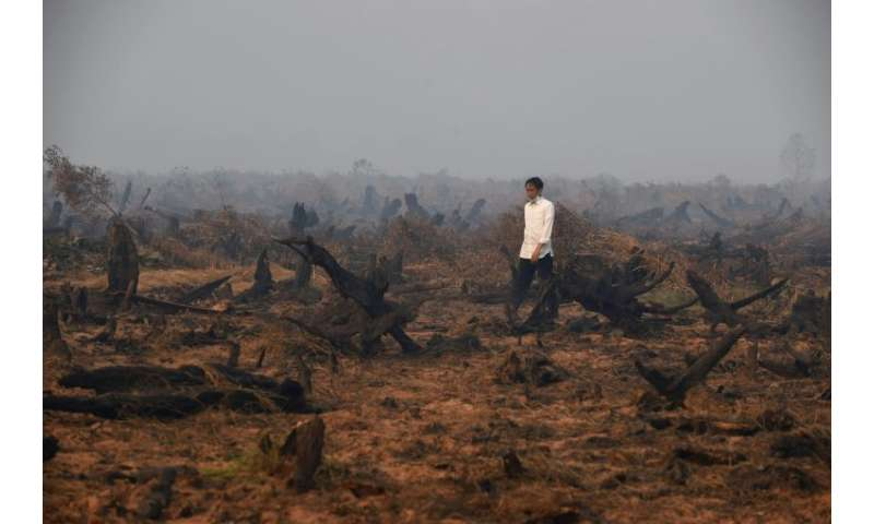 Photo taken in September 2015 shows Indonesia's President Joko Widodo inspecting a peatland clearing engulfed by fire: the blaze