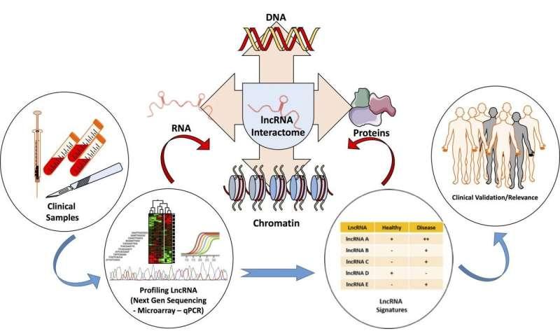 Platforms for investigating lncRNA functions