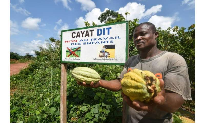 Podcast: A small farmer in Ivory Coast's CAYAT cooperative, which grows fairtrade-certified cocoa. The message on the board read