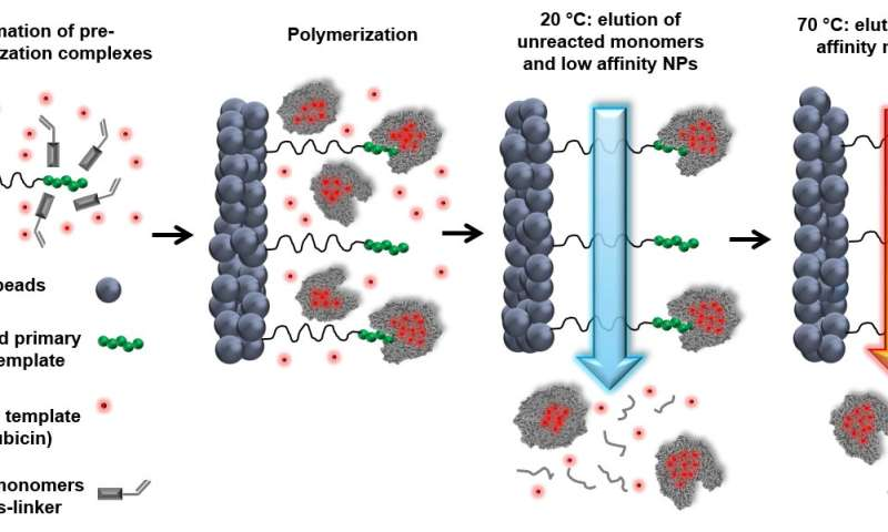 Polymer antibodies efficiently target and eliminate cancer cells