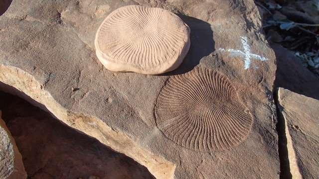 Pond scum explains evolution of first animals