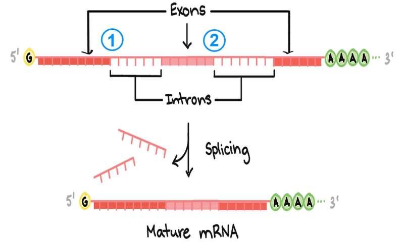 Predicting how splicing errors impact disease risk