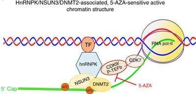 Probing RNA epigenetics and chromatin structures to predict drug resistance in leukemia