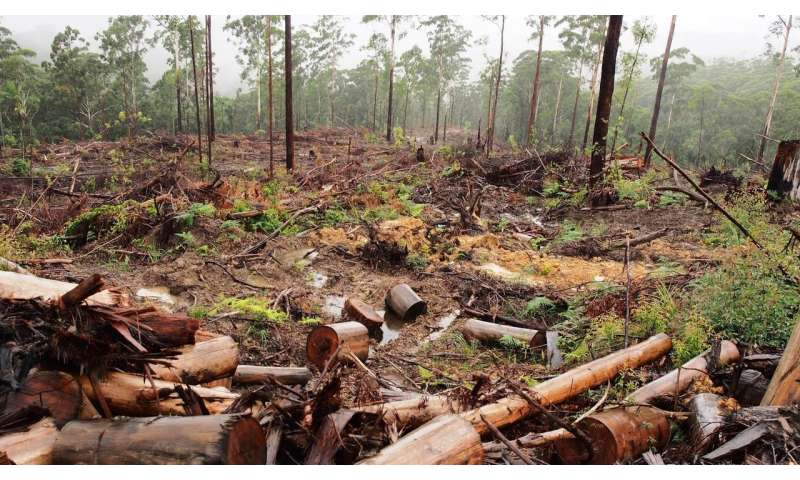 Proposed NSW logging laws value timber over environmental protection
