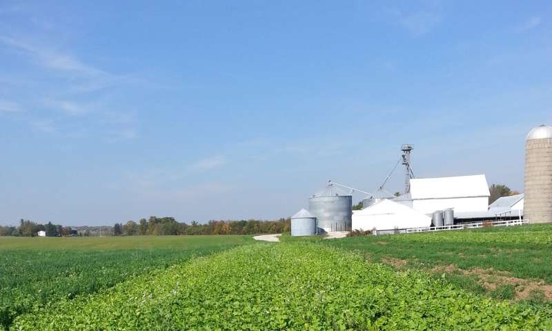 Radish cover crop traps nitrogen; mystery follows
