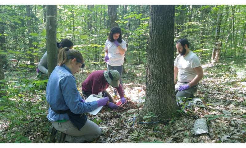 Rare and diverse giant viruses unexpectedly found in a forest soil ecosystem