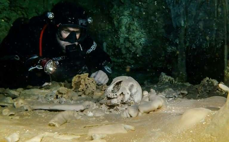 Remains of a Pleistocene bear from 2.5 million years ago, in the  Sac Actun underwater cave in Quintana Roo state, Mexico, in an