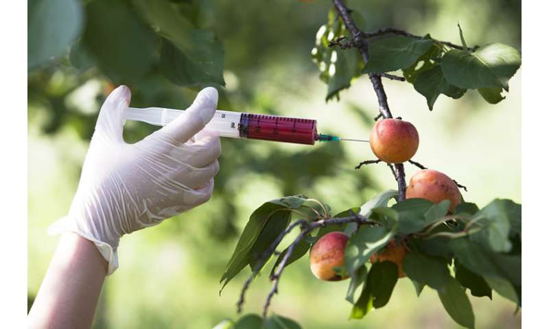 Research confronts 'yucky' attitudes about genetically engineered foods