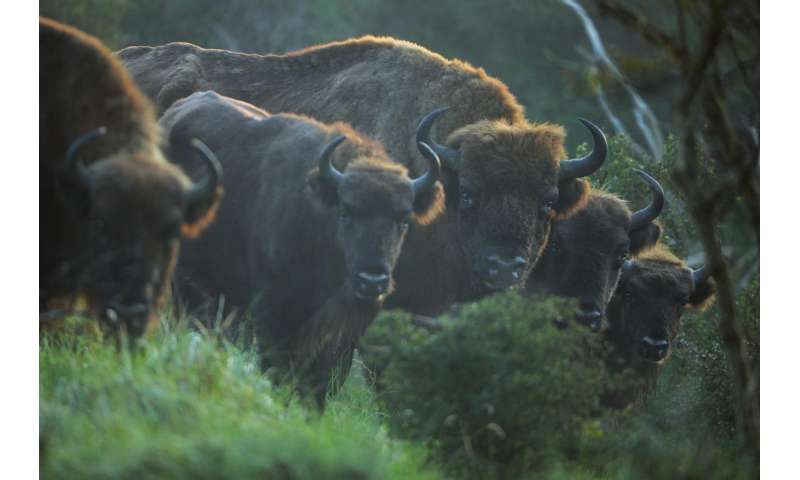 Rewilding landscapes can help to solve more than one problem