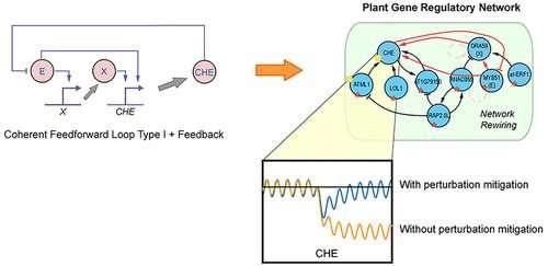 Rewiring plant defence genes to reduce crop waste