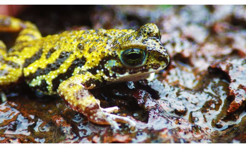 Rocky habitats need to be protected for endangered amphibians to survive