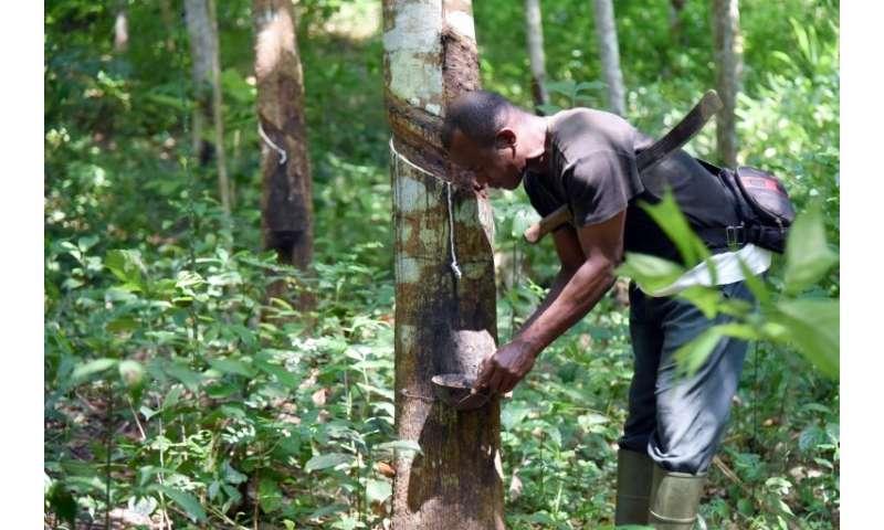 In Ivory Coast Global Rubber Glut Erases Profits