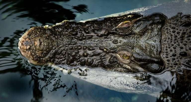 Saltwater crocodiles from Malaysia found at London Heathrow Airport had not been packed in accordance with international regulat