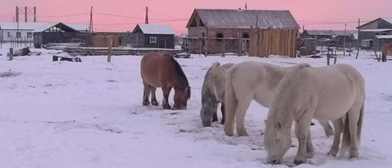 Same genes allow humans and domestic animals to survive in Arctic conditions