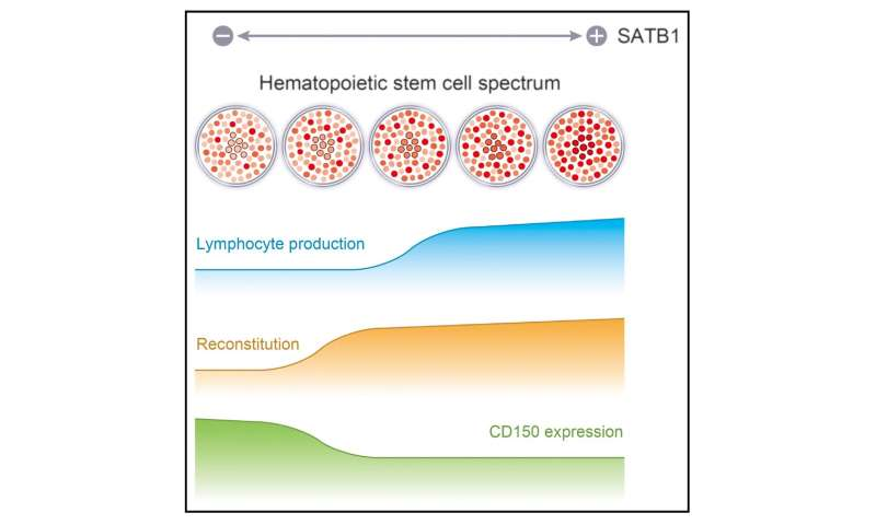 SATB1 vital for maintenance of hematopoietic stem cells