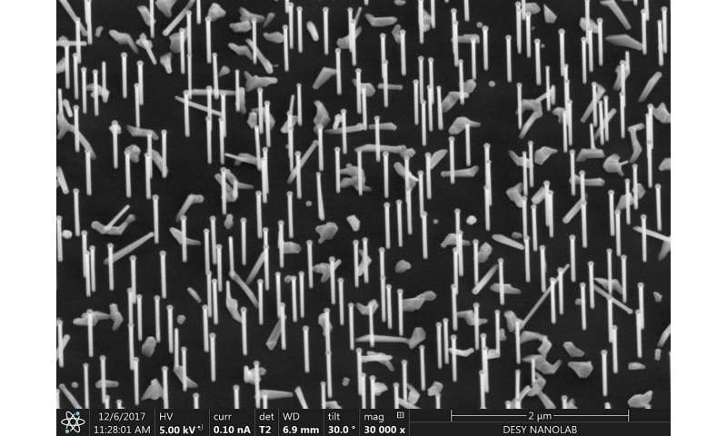 Scientists observe nanowires as they grow
