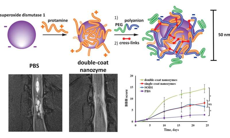 Scientists synthesize nanoparticle-antioxidants to treat strokes and spinal cord injuries