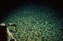 Seabed mining could destroy ecosystems