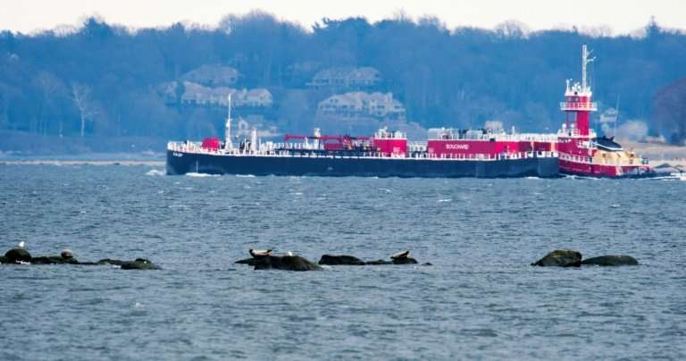 Seals rest on the rocks as a barge passes by March 15, 2018 near Orchard Beach in New York