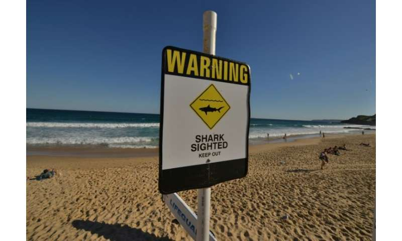 Shark attacks are rare, but still cause fear among ocean-users